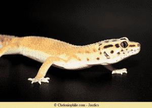Photo gecko léopard